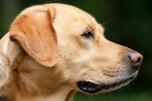 dog-1194083_192011